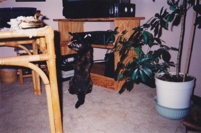 Ninja Theale circa 1995-6